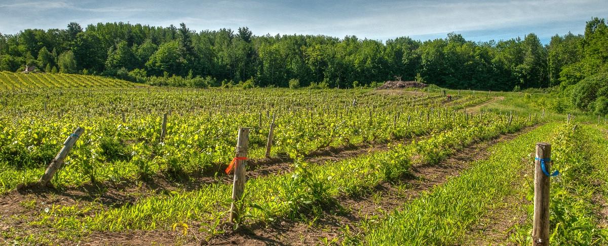 Domaine des Côtes d'Ardoises