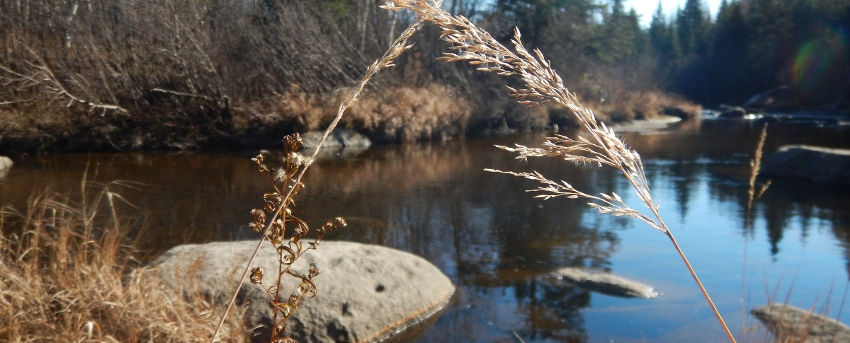 Aux Tipis de la Rivière Sauvage