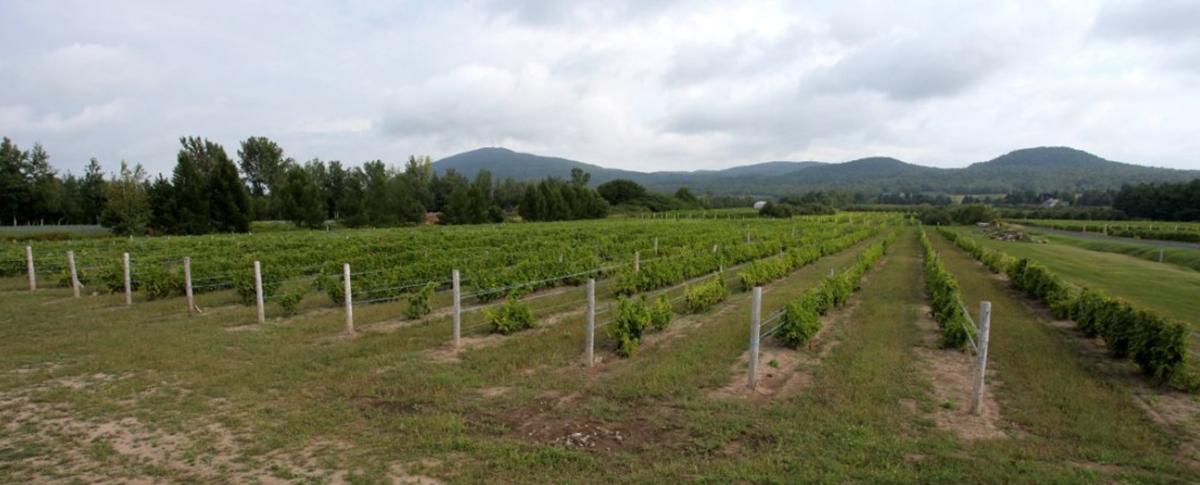 Domaine de Lavoie - Vignoble et cidrerie