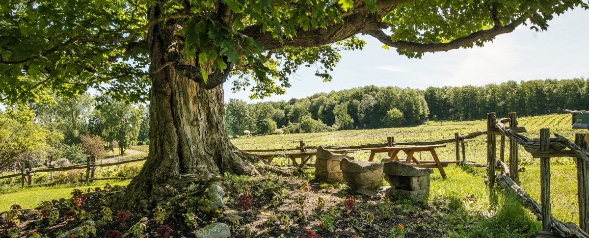 Domaine des Côtes d'Ardoise