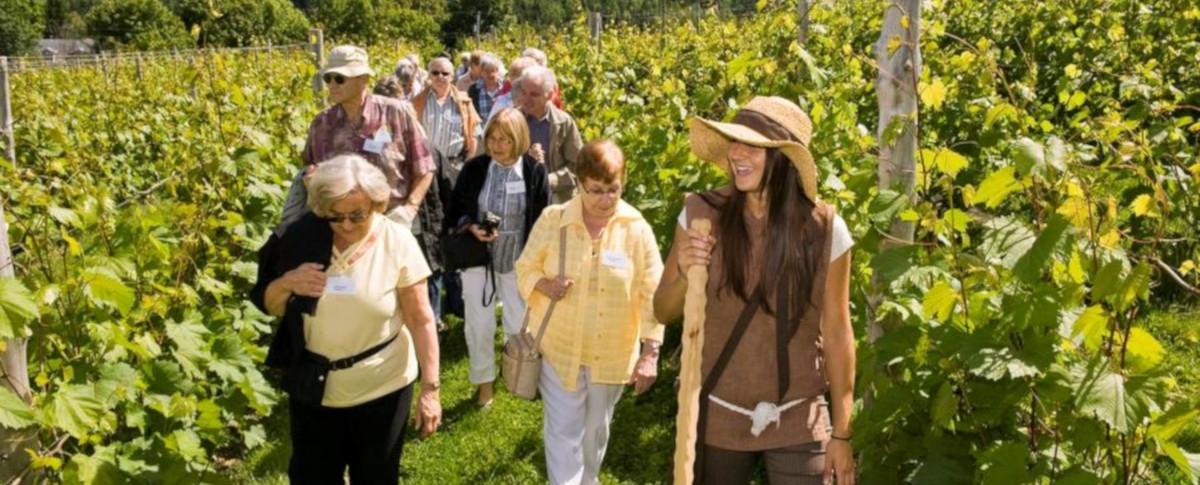 Vignoble La Halte des Pèlerins